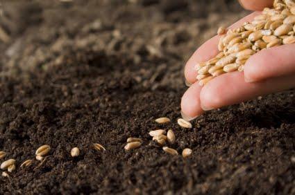Seeds-2.jpg